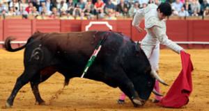 'Histérico', un gran toro de Fuente Ymbro. Fotografía: Arjona.