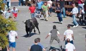 El toro con soga, toda una tradición de Lodosa.