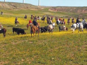 Un momento de la jornada de trashumancia de ganado.
