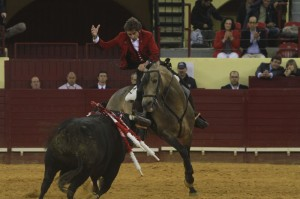 Ícaro fue el único caballo de los que toreó en Lisboa que no llevaba marcado el hierro del navarro.