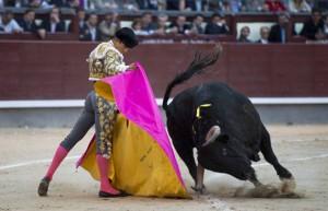 El segundo, Buenasuerte, fue un toro de nota alta en la muleta. Fotografía: Javier Arroyo.