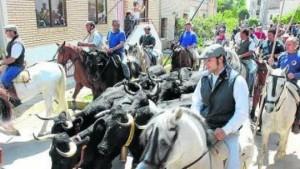 El año pasado ya se celebró en Arguedas una exhibición de trashumancia de ganado.