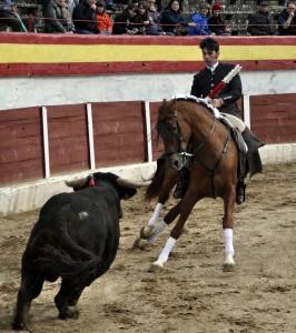 El nuevo caballo 'Grano de Oro' tuvo una actuación muy destacada en Torrejón de Ardoz