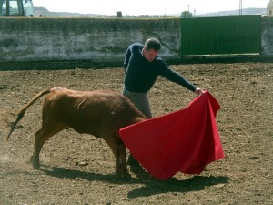Natural de Sergio Sánchez ante una de las vacas de Santafé. Fotografía: Miguel Monreal.