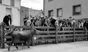 Un toro de Arriazu en las calles de Cortes el domingo pasado.