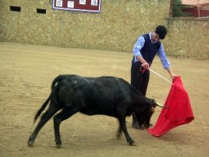 Toñete, ayundándose ante la segunda vaca de Bañuelos.
