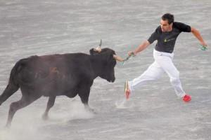 Uno de los recortadores deja una anilla en un pitón de una vaca. Fotografía: Eduardo Buxens.