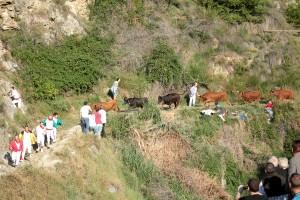 Las vacas de Lastur avanzan enfiladas.