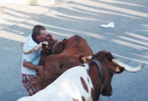 Momento en el que una vaca golpea al barcelonés. Fotografía: Montorio.