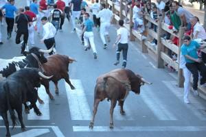 Los utreros navarros de Hermoso de Mendoza han galopado veloces. Fotografía: Ahora Zona Media.