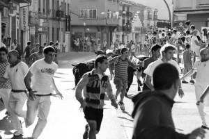 Numerosos mozos corrieron delante de los novillos de Ganadería de Pincha. Fotografía: Vaquero.