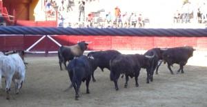 Los toros de Dolores Aguirre en el ruedo tafallés. Fotografía: Javier Manero.