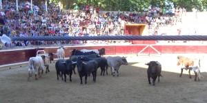 Los toros de Victorino Martín en el ruedo tafallés. Fotografía: Javier Manero.