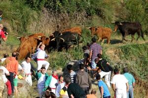 Las vacas de Hípica Zahorí al comienzo del recorrido.