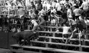 La vaca de Arriazu sube por las gradas murchantinas. Fotografía: Eva Aguado.