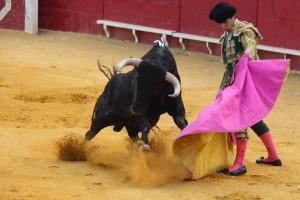 Javier Marín de recibo a la verónica en Lodosa. Fotografía: Juan Antonio Vaquero.