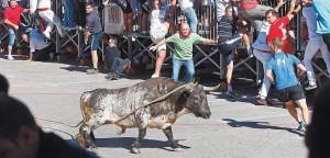 'Chistoso', de 560 kilos, de Condessa de Sobral, por la mañana en las calles de Lodosa. Fotografía: Montxo A. G.