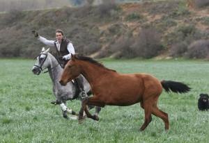 El caballero estellés preparará nuevos caballos para que debuten en América.