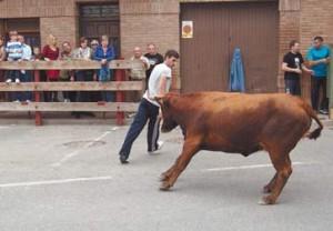 Bonito recorte a una vaca en Buñuel el pasado fin de semana.