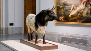 Imagen del toro disecado de Duque de Veragua.