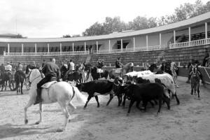 Jinetes y ganado en la plaza de toros cirbonera. Fotografía: P. R.