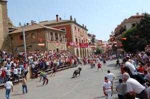 Panorámica de un toro esnogado en Lodosa. Fotografía: Isidro Gastón.