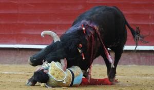 Un momento de la cogida que sufrió Enrique Ponce. Fotografía: Rullot.