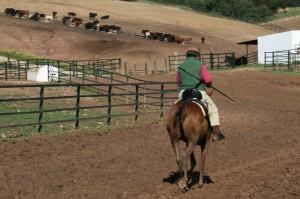 Ricardo Gallardo a caballo en la finca Los Romerales, que visitarán los aficionados peralteses.