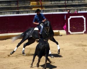Armendáriz toreando con Litri, uno de sus nuevos caballos.