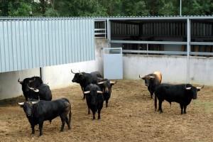 Los ocho toros de Garcigrande y Domingo Hernández en el Gas. Fotografías: Casa de Misericordia de Pamplona.
