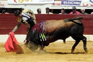 El toro de Cebada Gago Castañuela toma la muleta de Pérez Mota en Vic Fezensac. Imagen Isabelle Dupin.