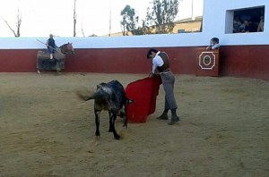 Muletazo de Francisco Marco a una vaca burraca de Cebada Gago.