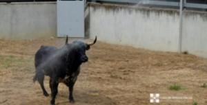 Toro y manguera