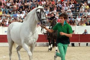 'Chicuelo', llevado del ramal por Guillermo Hermoso de Mendoza.