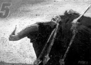 El toro de lidia, protagonista de la exposición en Pamplona.