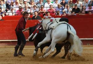 Momento en el que 'Pirata' muerde al toro, que se había arrancado al rejoneador.