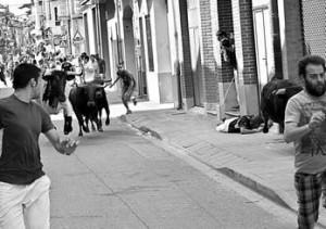 Uno de los novillos ha alcanzado, sin mayores consecuencias, a un mozo. Fotografía: Gener.