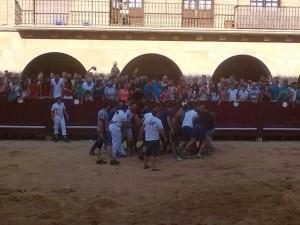 Los mozos llevan de vuelta al corral a la vaca que ha saltado el vallado.