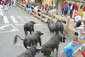 La manada de Rosa Rodrgues durante el encierro de esta mañana. Fotografía: ahorazonamedia.com