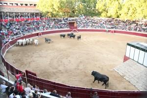 Desencajonamiento de los toros de Antonio Bañuelos. Fotografía: Ahorazonamedia.com