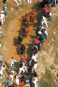 La manada de Hermanos Magallón galopa unida. Fotografía: Jesús Caso.