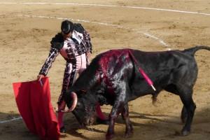 Derechazo de mano baja del pamplonés Expósito al que abrió plaza, un buen utrero de Hermanas Azcona, al que le cortó una oreja. Fotografía: Miguel Monreal.
