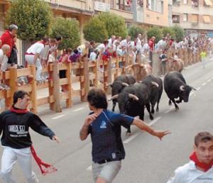 Un momento del encierro con los toros de Castillejo de Huebra. Fotografía: Arturo Galdona.