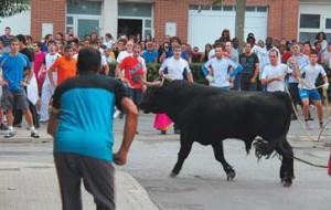 El toro ensogado de El Tolco, ayer en las calles de Lodosa. Fotografía: Vaquero.