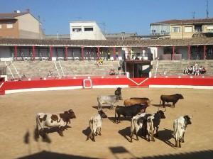 Los toros de Los Eulogios y varios cabestros en el ruedo corellano. Fotografía: R. Villanueva.