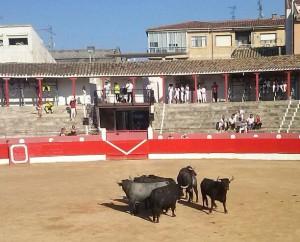 Algunos de los toros de Partido de Resina. Fotografía: R. Villanueva.