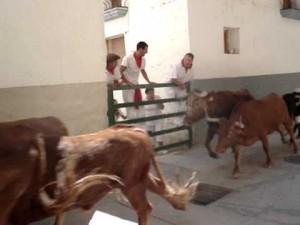 Una suelta de vacas en Artajna.
