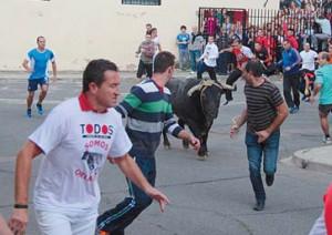 El toro de Victorino Martín en las calles de Lodosa. Fotografía. Juan Antonio Vaquero.