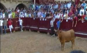 Una tarde de vacas en Puente la Reina.