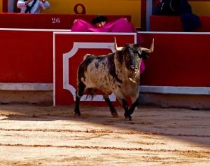 Esta es la imagen ganadora del concurso fotográfico del Club Taurino de Pamplona.
